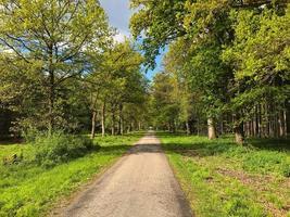 punto di fuga di una pista ciclabile nel mezzo di una foresta tedesca foto