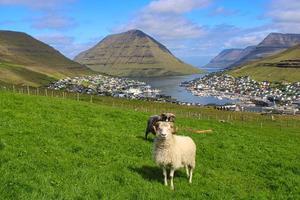 pecore di fronte allo splendido paesaggio urbano di klaksvik sulle isole faroe foto