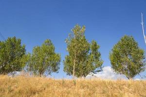 gruppo di alberi su uno sfondo di cielo blu foto