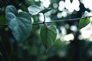 foglie verdi sfondo naturale foto