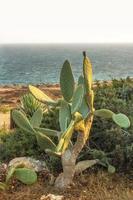 cactus sullo sfondo della costa mediterranea foto