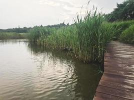 il molo di legno ricoperto di canne sul lago della città di sokcho, corea del sud foto