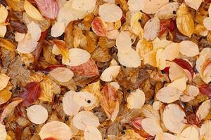 posa piatta di foglie autunnali cadute. foto