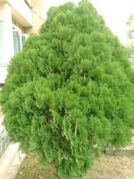 foglia di foglia di colore verde sul giardino foto
