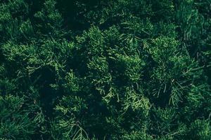 la natura lascia lo sfondo verde in giardino in primavera. sfondo naturale fogliame tropicale scuro. foto