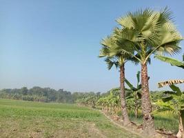 stock di palma di colore verde foto