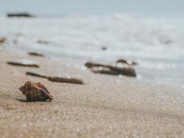 conchiglia rapan e pietre di mare foto