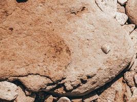 una conchiglia su una grande pietra. concetto di estate foto