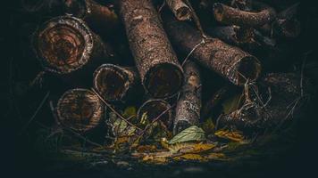 legna da ardere secca su uno sfondo di fogliame autunnale foto
