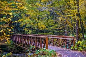 viste lungo il sentiero dei rampicanti della Virginia durante l'autunno foto