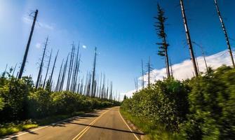 alberi bruciati contro il cielo nuvoloso, contea di ghiacciaio, ghiacciaio occidentale, montana, stati uniti d'america, strada per andare al sole, parco nazionale del ghiacciaio foto