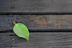 una foglia verde caduta sul sentiero di legno marrone scuro foto