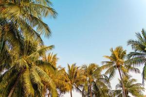 bella palma da cocco con cielo blu foto