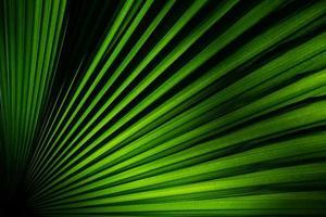 immagine ravvicinata della foglia verde della pianta foto