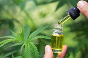 CBD olio di canapa, mano che tiene una bottiglia di olio di cannabis contro la pianta di marijuana. trattamento a base di erbe, medicina alternativa foto
