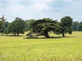 alberi in un parco di campagna inglese in estate foto