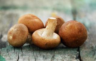 fungo shiitake sul legno vecchio foto