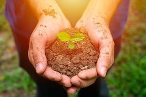 mani dell'agricoltore che piantano le piantine nel terreno foto