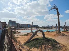 vecchie palme sulla spiaggia della città di hurghada, egitto foto