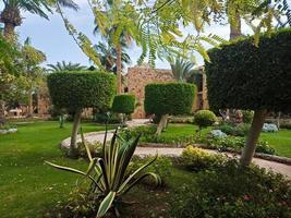 bellissimo giardino verde con palme e cespugli ricci nella città di hurghada, in egitto foto
