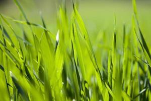 campo di erba verde foto
