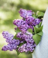 bouquet di lillà nelle mani di una donna foto