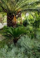 giardino alberato con palme a murcia, spagna foto
