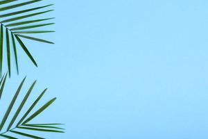 foglie di una pianta verde su uno sfondo colorato con un posto per il testo foto