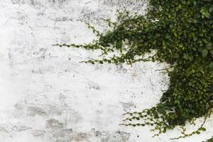 lunghi rami di una pianta su un muro bianco con copyspace foto