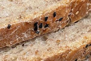 primo piano pronto da mangiare pane fresco foto