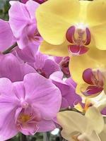 primo piano di fiori di orchidea per lo sfondo foto