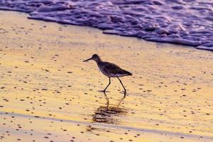 tramonto a playa del rosarito - spiaggia di rosarito, messico 2019 foto