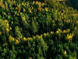 un drone si erge sopra una foresta multicolore nei Vosgi. corone di alberi gialle, arancioni, rosse. foto