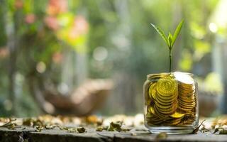 albero con crescita su salvadanaio di vetro da una pila di monete d'oro con sfondo sfocato foto