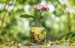 albero con fiori che crescono su salvadanaio di vetro da una pila di monete d'oro con sfondo sfocato foto