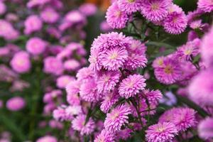 bellissimo sfondo di fiori di benjamas foto