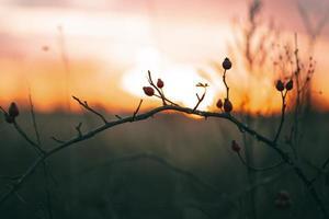 tranquilla luce del tramonto foto