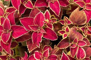 bellezza della natura e dei fiori foto
