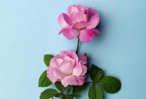 carta mockup vuota con fiori e piante foto