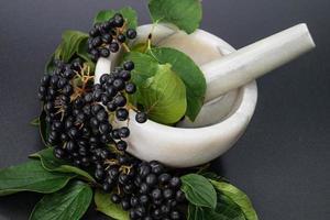 sorbo nero aronia chokeberry foto