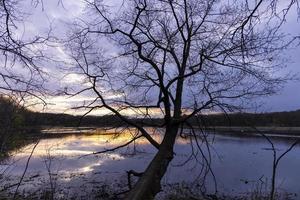 sagoma di albero in riva al lago durante il tramonto foto