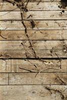 modello di legno grunge foto