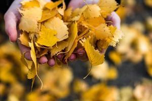 mani che tengono le foglie d'arancio autunnali cadute da vicino isolate. foto