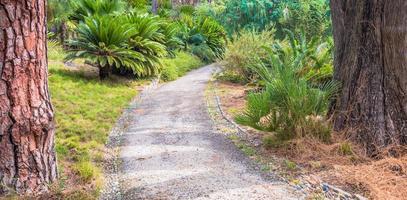 percorso tranquillo nel giardino botanico foto