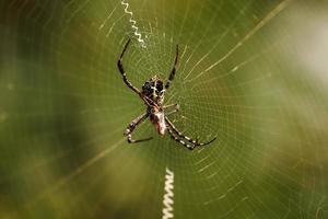 ragno sul web foto