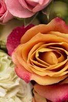 fiori di rosa colorati splendidamente sbocciati distesi piatti foto