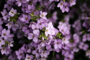 primo piano bellissimi fiori dettagli natura foto