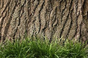 primo piano bella trama di corteccia d'albero foto
