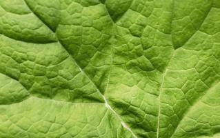 primo piano foglie verdi natura foto