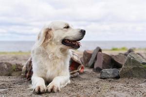 simpatico cane all'aperto. simpatico cagnolino sorridente all'aperto foto